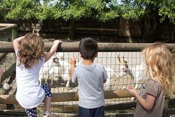 Gita scolastica al parco divertimenti Leolandia